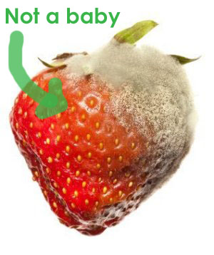 moldy_strawberry_s copy