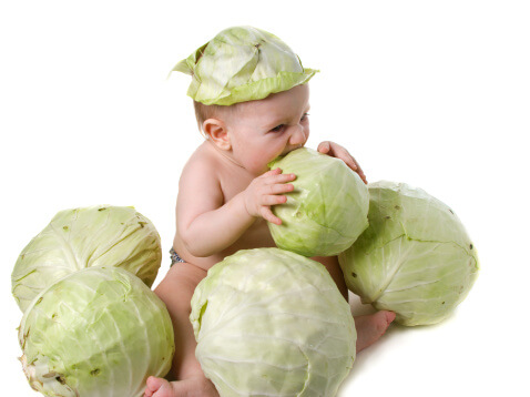 Cabbage-Leaves-and-Engorgement