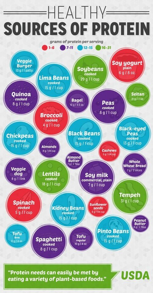 Protein-Chart